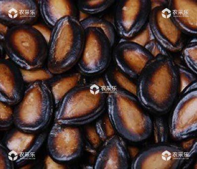 西瓜种子消毒方法详细介绍