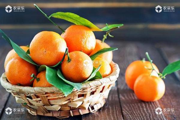 柑橘红蜘蛛用什么药最有效 柑橘红蜘蛛发生规律与防治措施