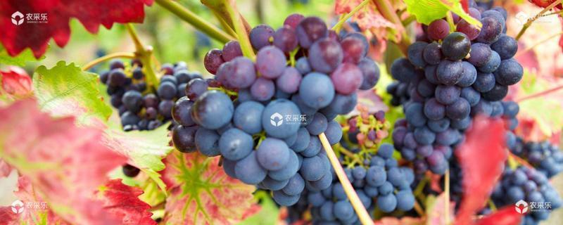 葡萄种植季节几月好