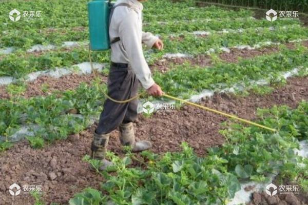 西瓜施肥时间及方法