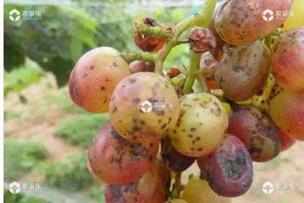 葡萄用药周期表,附常见病及对应用药
